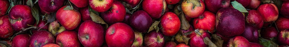 autumn harvest of red apples